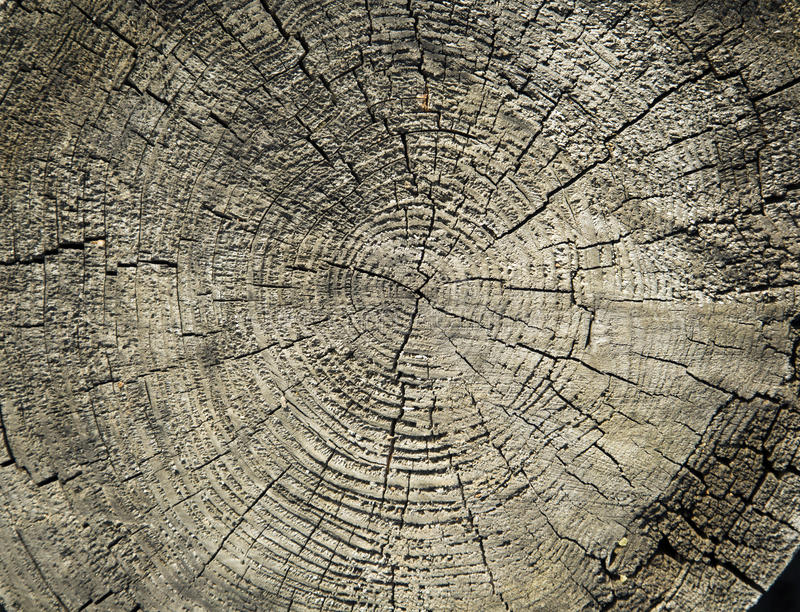 Wooden texture on a stub stock image