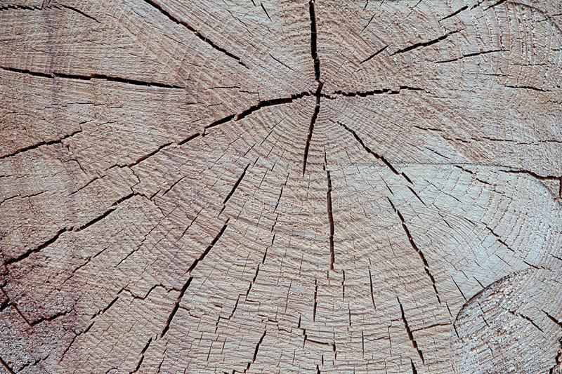 Wooden texture tree trunk close-up fractured surface annual rings background light beige rustic base stock photography