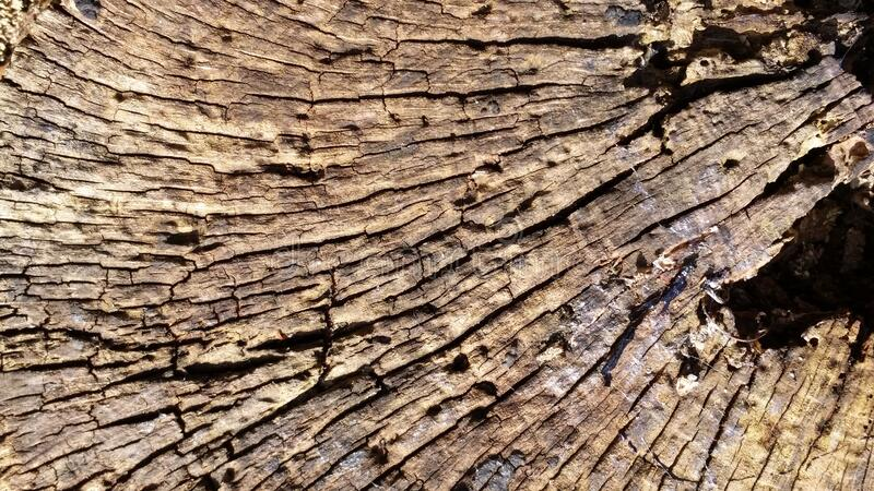 Wooden Details. Zoom Old Wooden Details And Textures.  Forests In Europe royalty free stock photos
