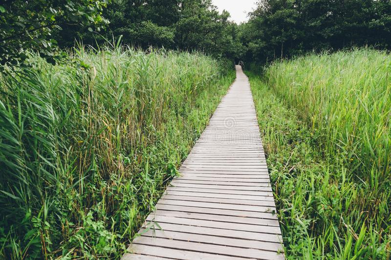 Wooden track in moor with grass stock photo