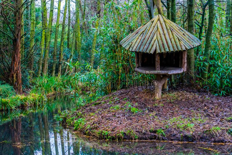 Wooden tree hut on the river side in a tropical looking swamp landscape. A wooden tree hut on the river side in a tropical looking swamp landscape royalty free stock photography