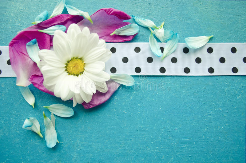 Wooden turquoise surface with chamomile, colorful flower petals and white spotted ribbon. royalty free stock photo