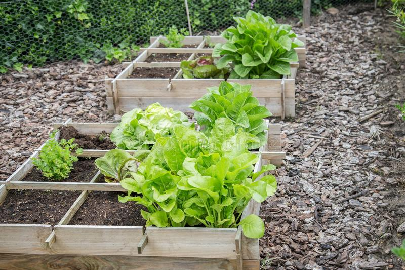 Wooden vegetable garden boxes stock photos