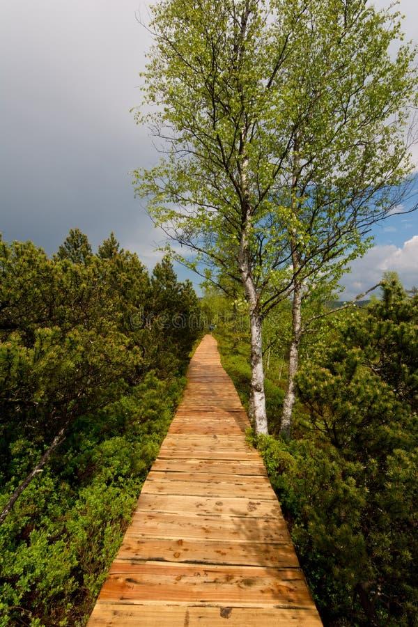Wooden walk to Chalupska slat. Wooden walk to Panorama of chalupska slat at Sumava, Bohemia stock images
