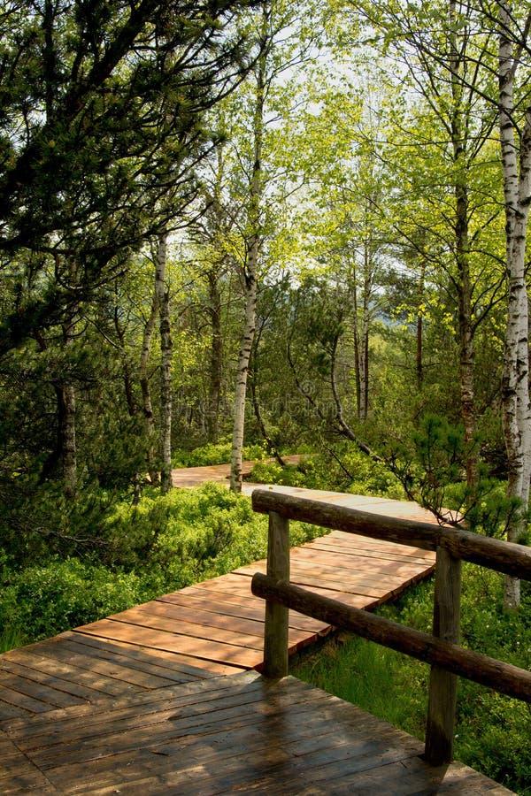 Wooden walk to Chalupska slat. Wooden walk to Panorama of chalupska slat at Sumava, Bohemia royalty free stock image
