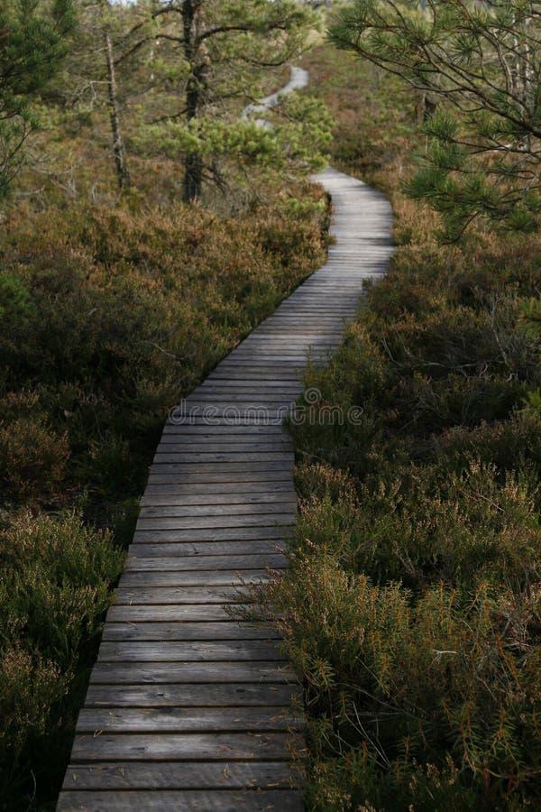 Free Wooden Walkaway Stock Photos - 2958683