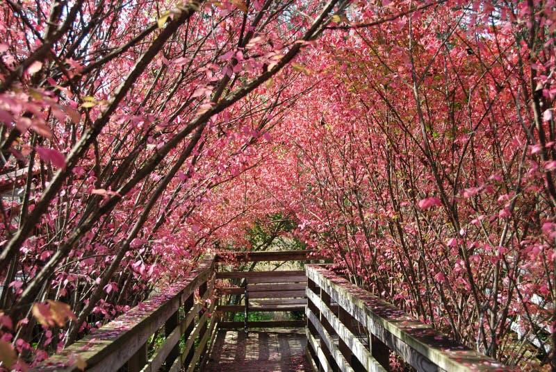 Wooden Walkway stock images