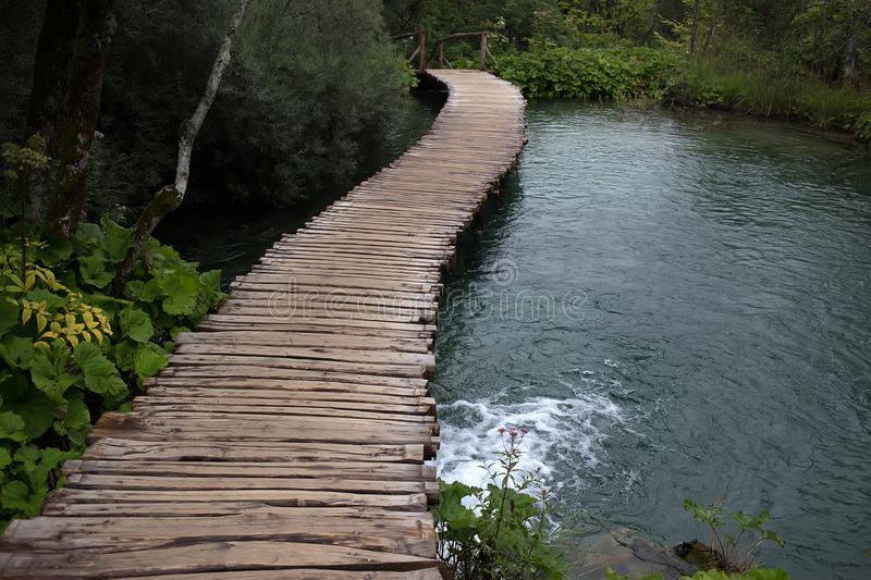 Wooden walkway across river. Photo closeup of path walkway made of wood across river lake among green plants bushes trees at day time in summer on natural stock photos