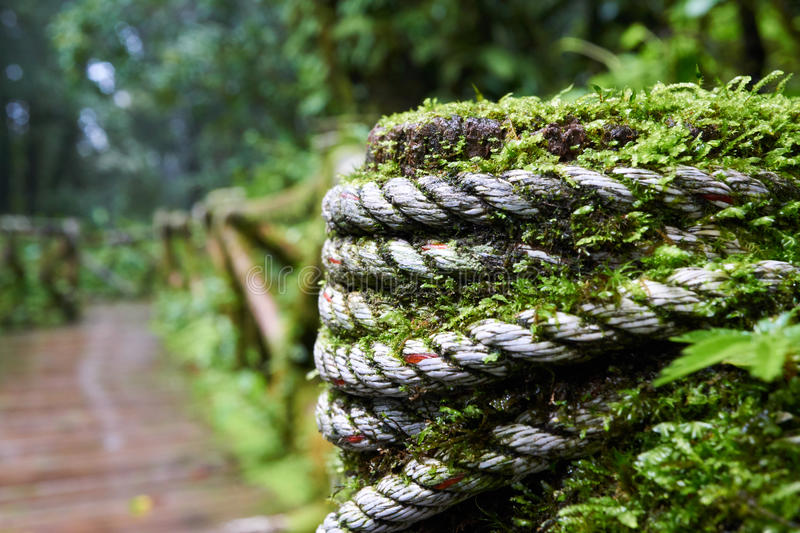A wooden walkway covered in green moss stock image