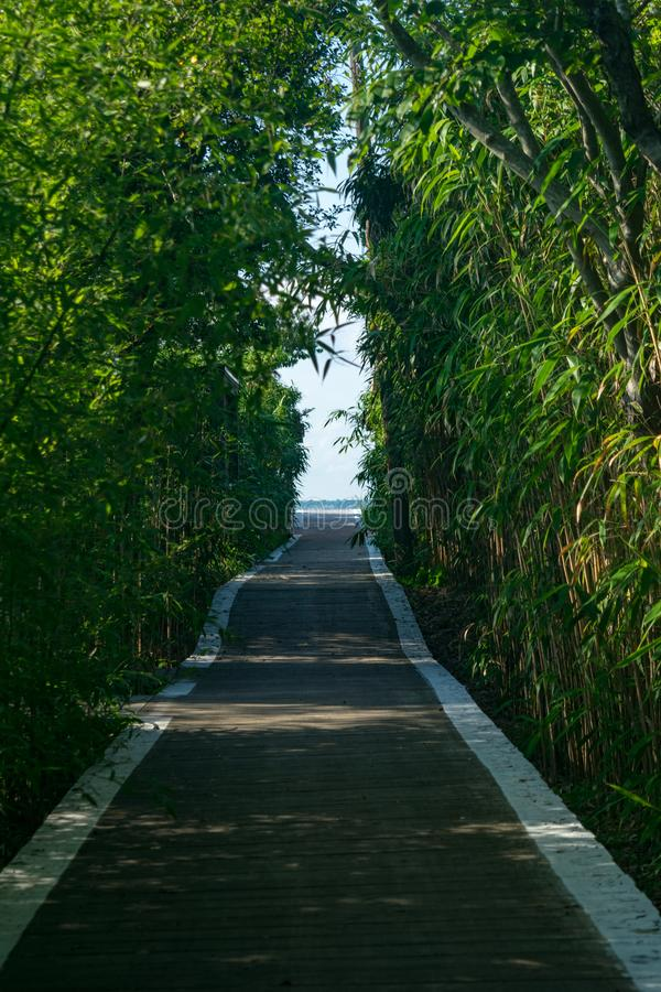 Wooden walkway covered by trees and bushes, leading toward an opening in the distance, Fire Island, NY stock images