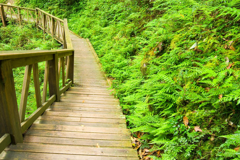 Wooden Walkway Into The Forest Stock Images