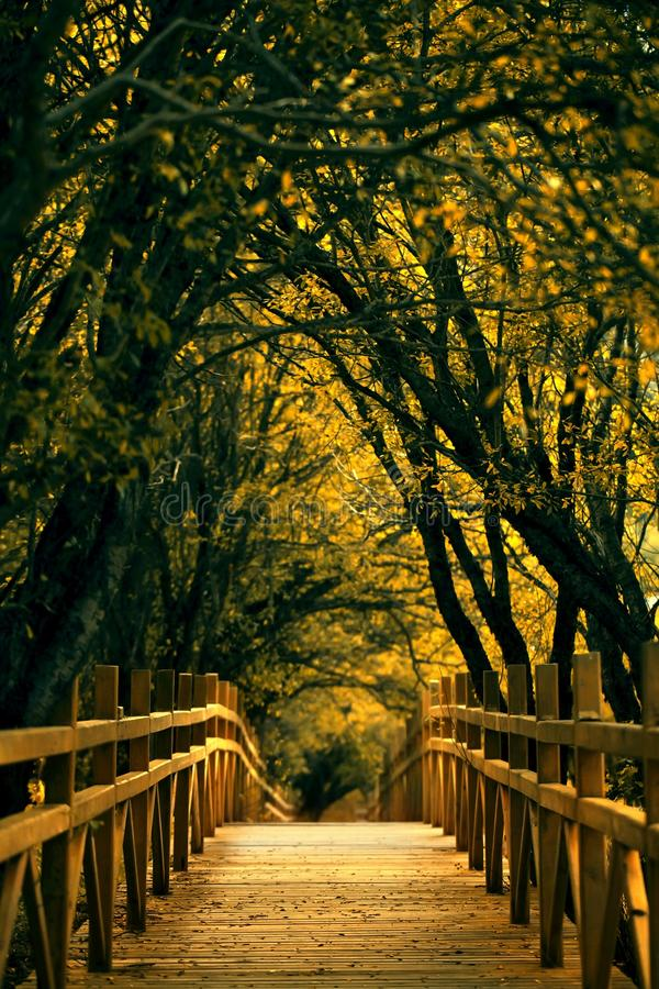 Download Wooden Walkway Through Forest Stock Image - Image: 22513449