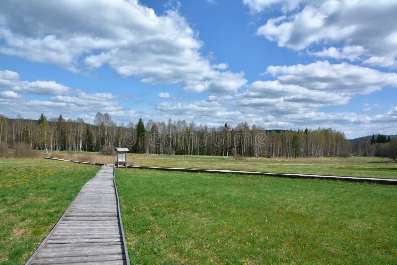 Wooden walkway to Chalupska slat. Chalupska Slat, Sumava, South Bohemia, Czech republic royalty free stock photo