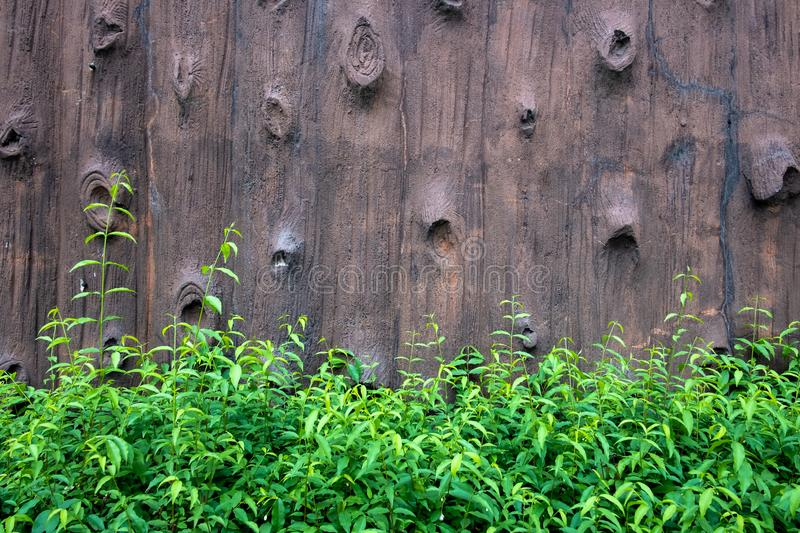 Wooden wall and green plant. Garden, natural, building, leaf, nature, season, architecture, landscape, home, detail, ivy, fresh, environment, growth, creeper stock image