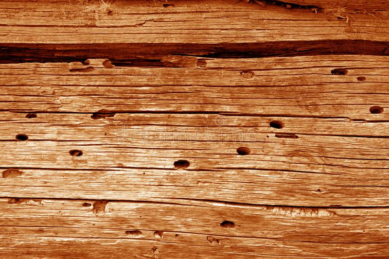 Wooden wall texture in orange color. Abstract background and texture for design, vintage, old, weathered, timber, tree, carpentry, natural, painted, materials royalty free stock photo
