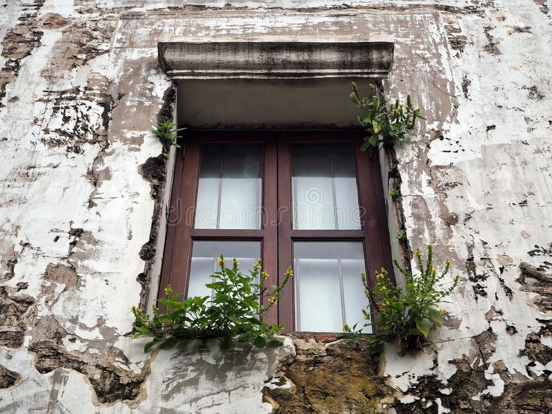 Wooden Window on the Old White Concrete Wall royalty free stock photo