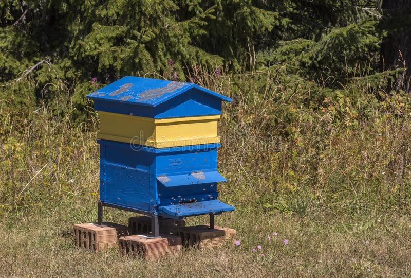 Wooden yellow and blue Bee hive , beehive. Wooden yellow and blue bee hive, beehive in garden stock image