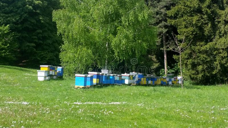 Wooden yellow and blue Bee hive. Beehive in garden stock images