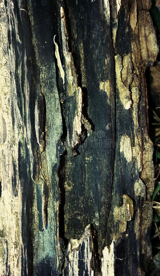 woodgrain στοκ φωτογραφίες με δικαίωμα ελεύθερης χρήσης