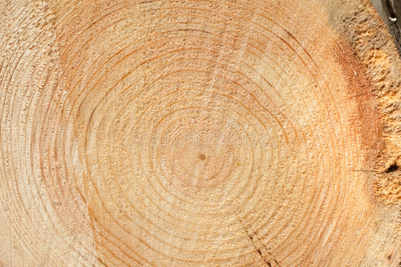 woodgrain στοκ εικόνες