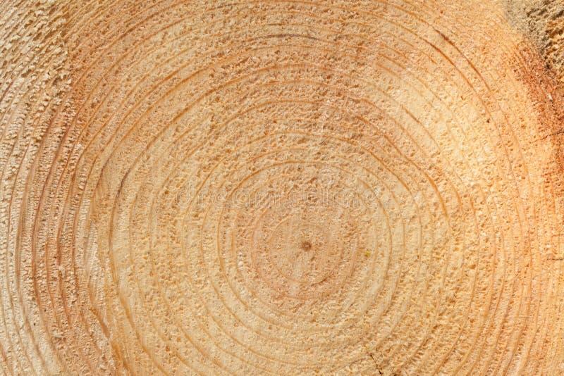 woodgrain στοκ εικόνες με δικαίωμα ελεύθερης χρήσης