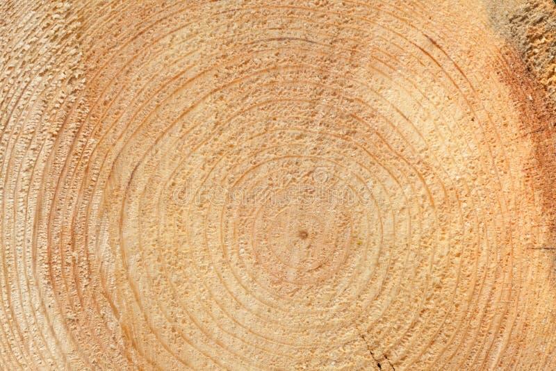 woodgrain foto de archivo libre de regalías