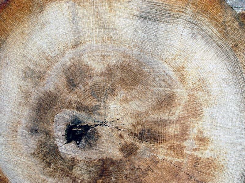 Woodgrain Стоковая Фотография