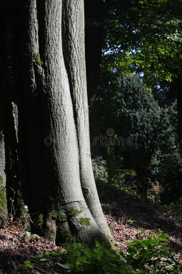 Download Woodland stock photo. Image of forest, timber, wood, green - 15727188