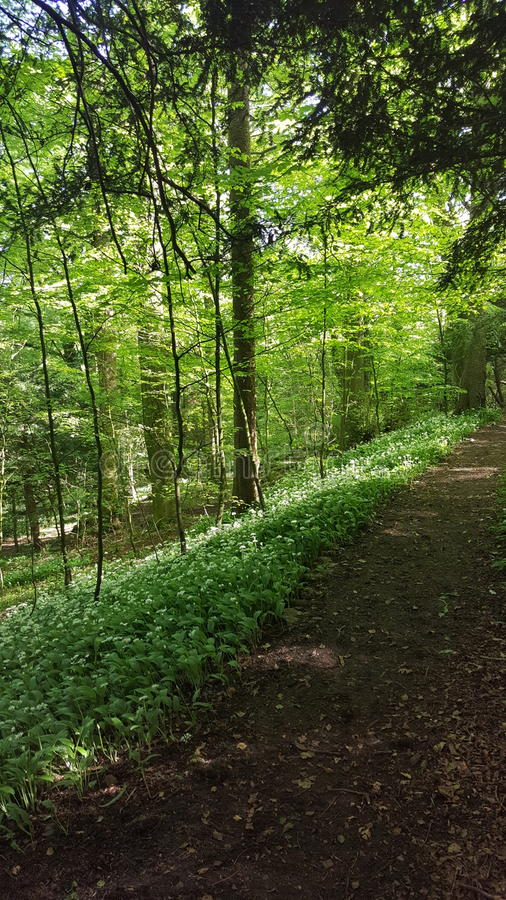 woodland photos libres de droits