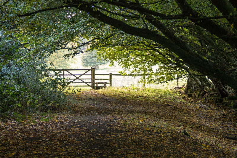 Woodland Archway stock photography