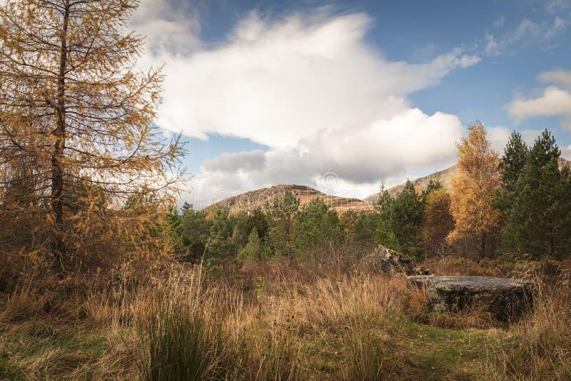 Laggan autumn royalty free stock photography