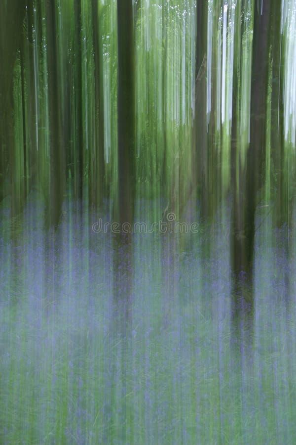 Woodland and Bluebells Blur