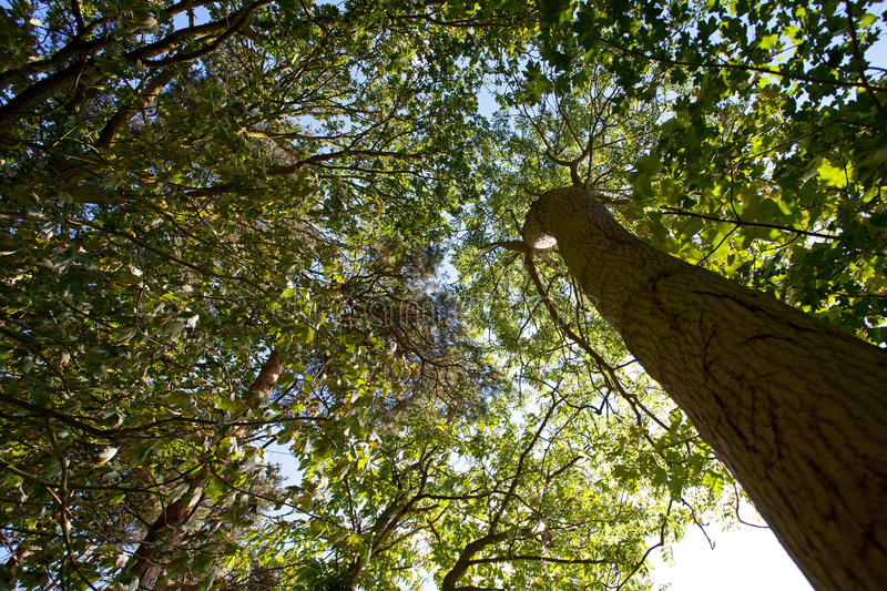 Download Woodland Canopy stock photo. Image of nature, paper, green - 20671430