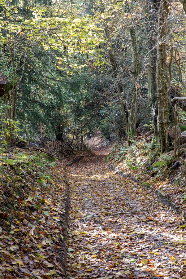 Woodland Dirt Track fotografia stock libera da diritti