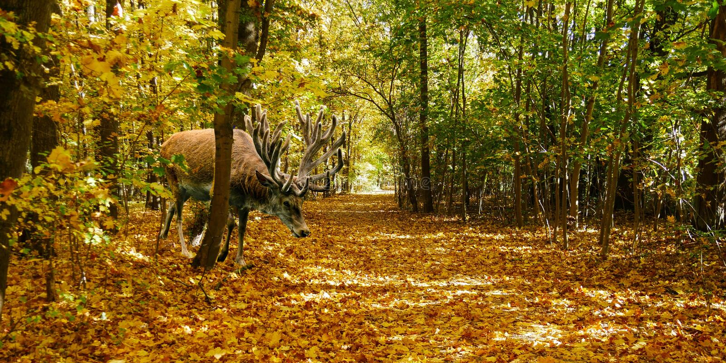 Woodland, Ecosystem, Wildlife, Forest Free Public Domain Cc0 Image