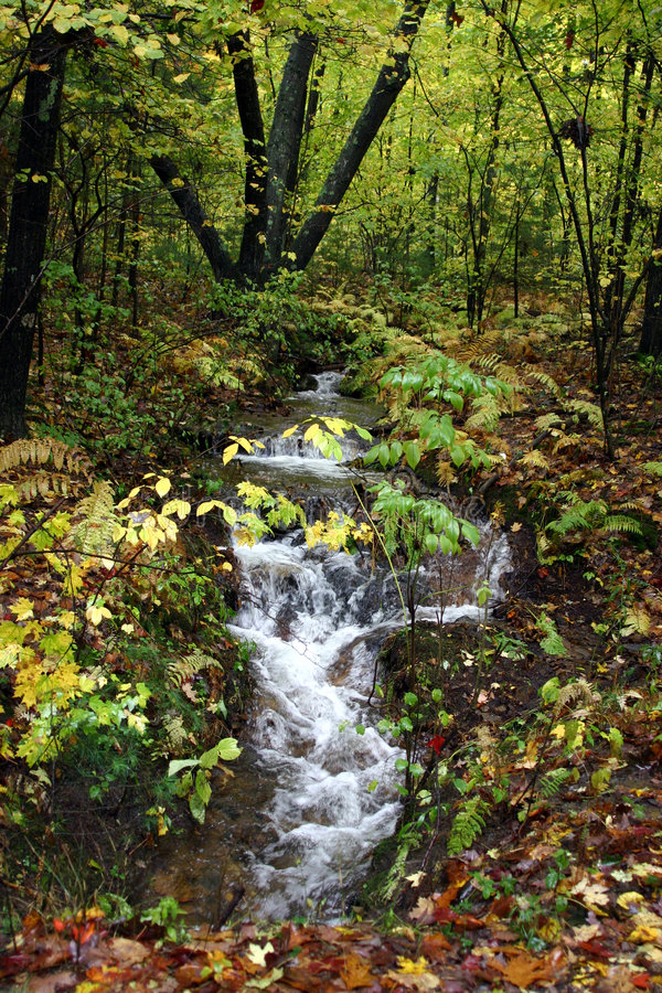 Free Woodland Falls After Storm Royalty Free Stock Photos - 315868