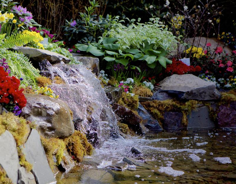 Woodland Ferns and Falls. Garden waterfall trickling over mossed rocks into a shallow pool.  Lined with colorful flowers and greenery royalty free stock image
