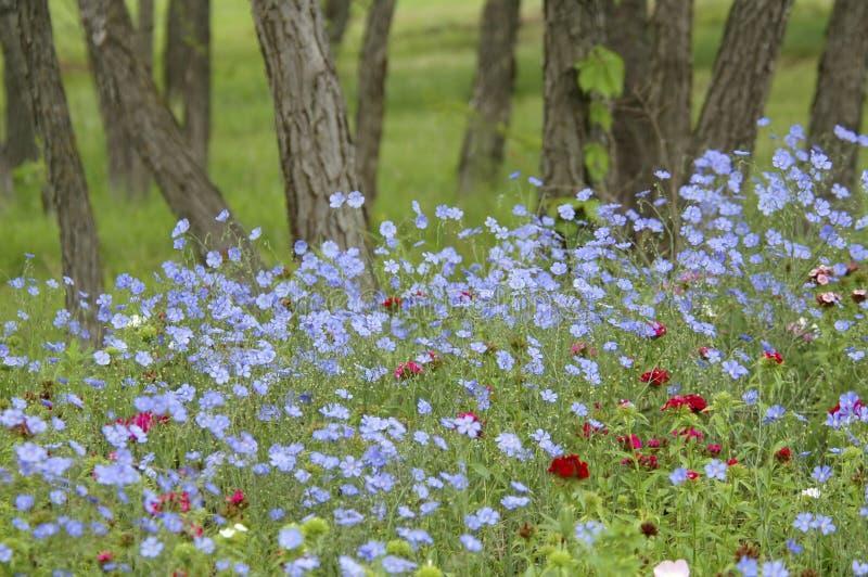 Woodland Flowers royalty free stock photos