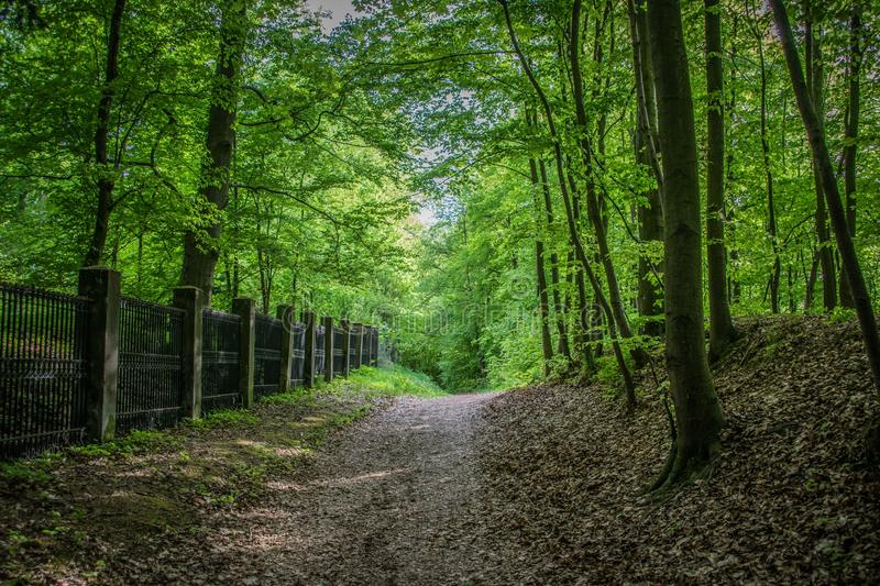 Woodland, Forest, Nature, Path royalty free stock photos