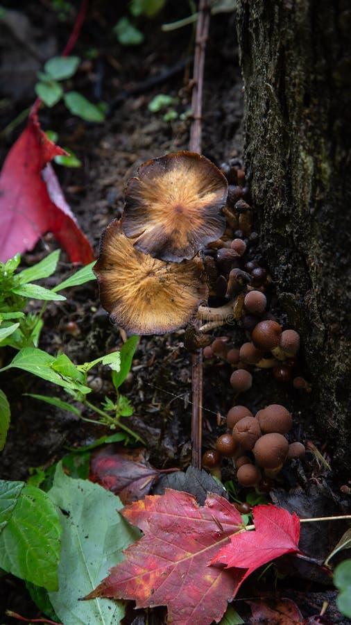 Woodland fungi stock photography