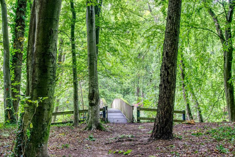 Woodland, Green, Nature, Forest stock image