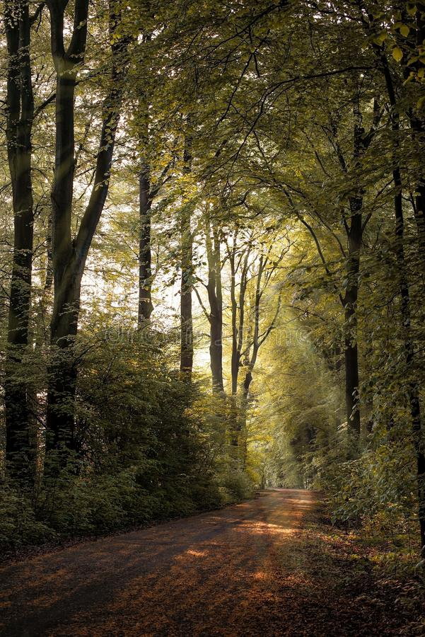 Woodland, Nature, Forest, Path stock photo
