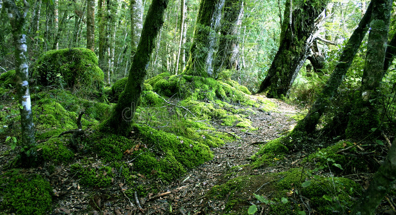 Download Woodland New Zealand stock photo. Image of cool, hillside - 2653280