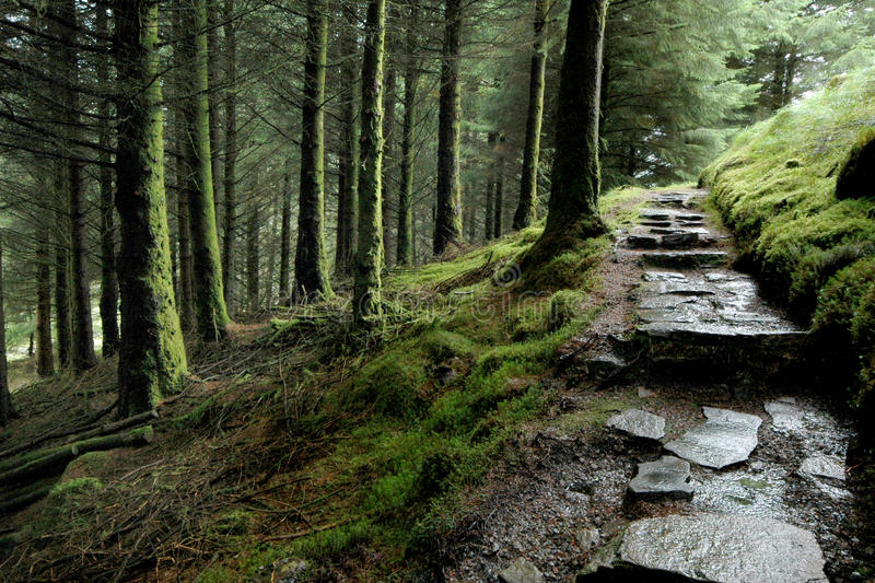 Woodland path. A stony path leading through a pine forest in Scotland UK stock photos