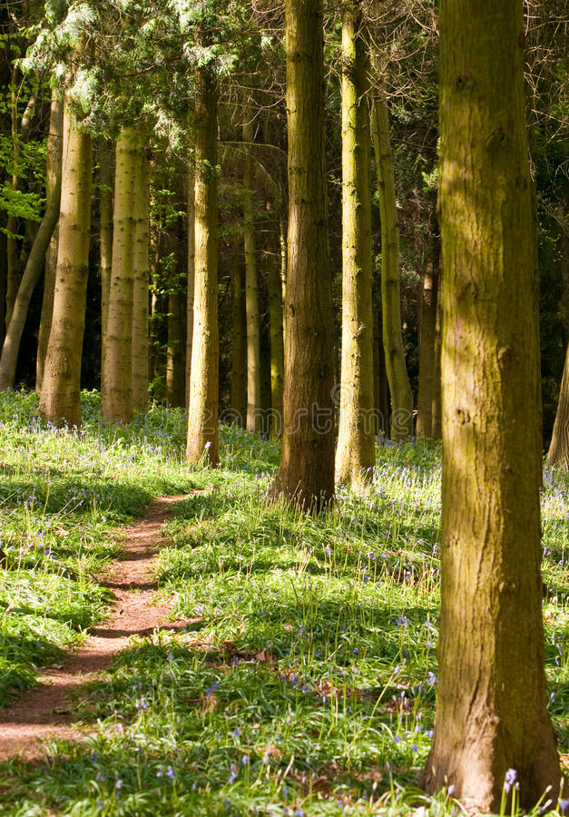 Woodland Path royalty free stock image