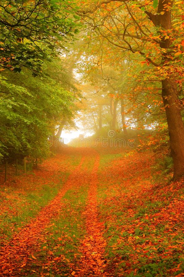 Download Woodland path in autumn stock photo. Image of mist, tree - 27271004