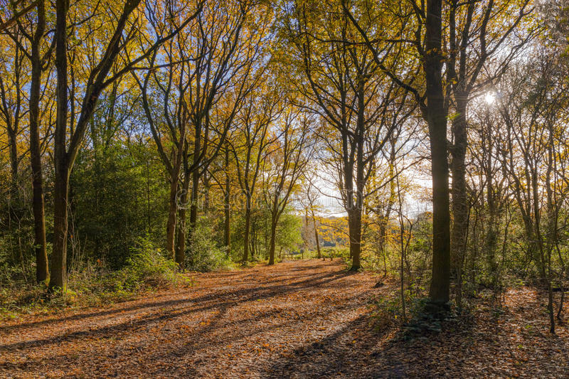 A Woodland Path. royalty free stock photos