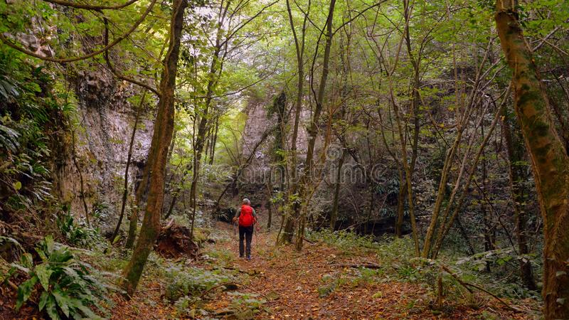Woodland, Path, Ecosystem, Forest stock photography