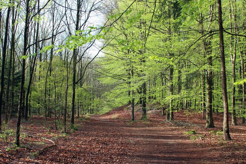 Woodland, Path, Ecosystem, Forest royalty free stock image