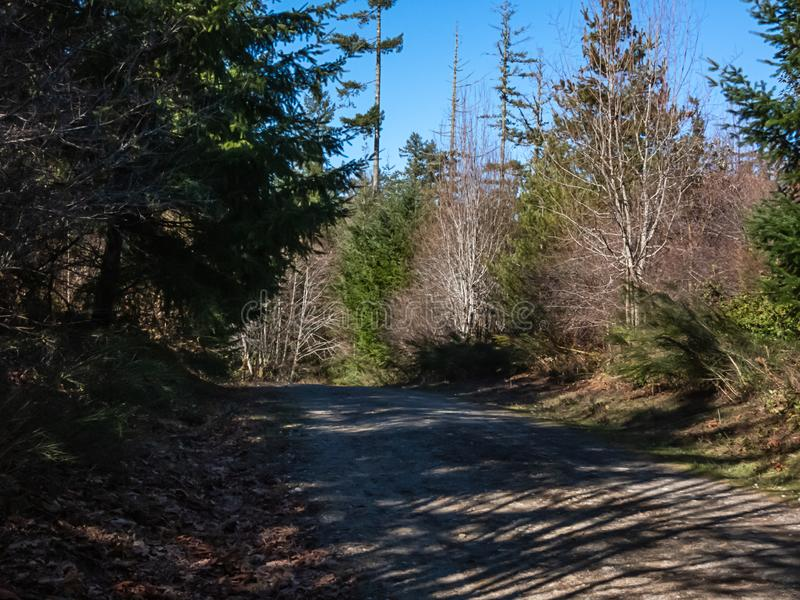 Woodland path in late winter sun in western washington royalty free stock images